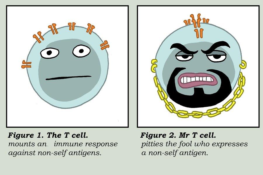Ashes to #ASH16: CAR-T, anticorpi, hedgehog ed altro ancora