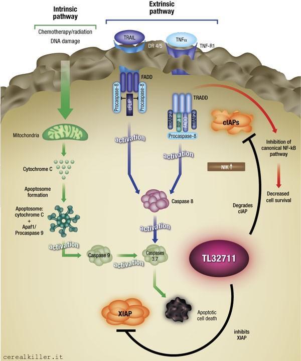 ASCO 2013 (Parte 1): Curis ($CRIS) e gli inibitori dell'apoptosi